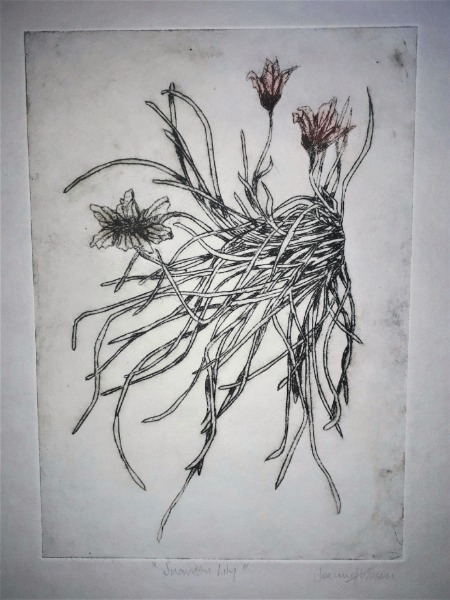 Etching (drypoint) - Snowdon Lily
