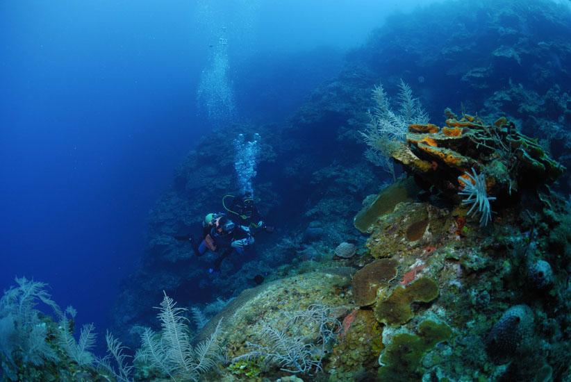 Reef Wall, Maria La Gorda