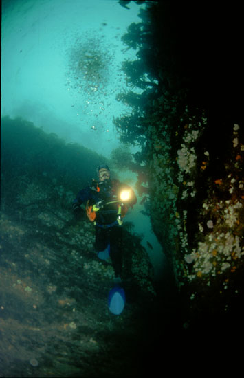Diver at Stack Fine, Isle of Man