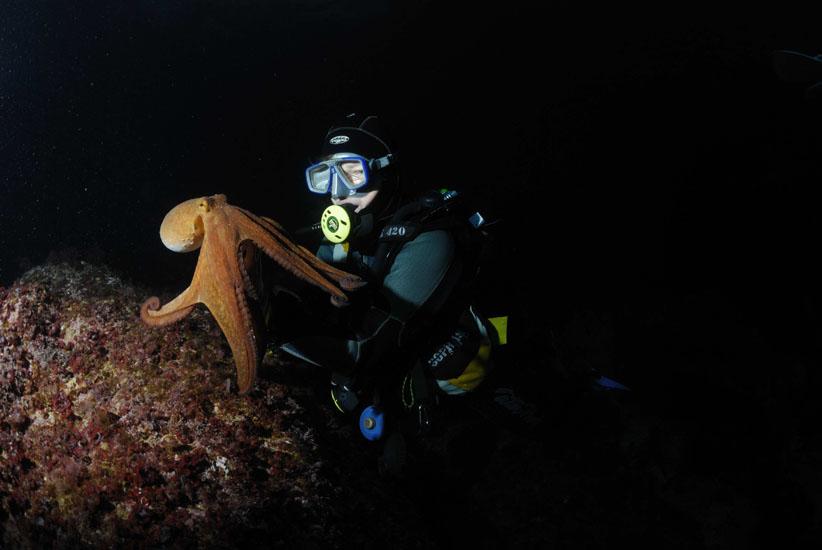 Common Octopus  <i>Octopus vulgaris