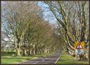 Beech Tree Avenue