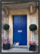 Cat on the Doorstep