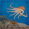 #10 Octopus seeking prey