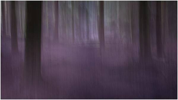 8 - Purple path