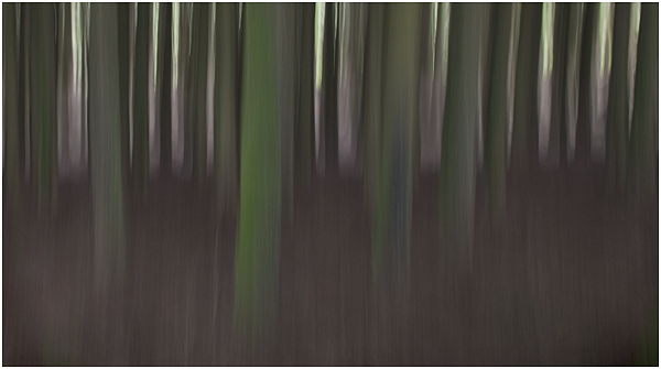 9 - Bellever pines