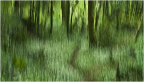 10 - Path through ramsons