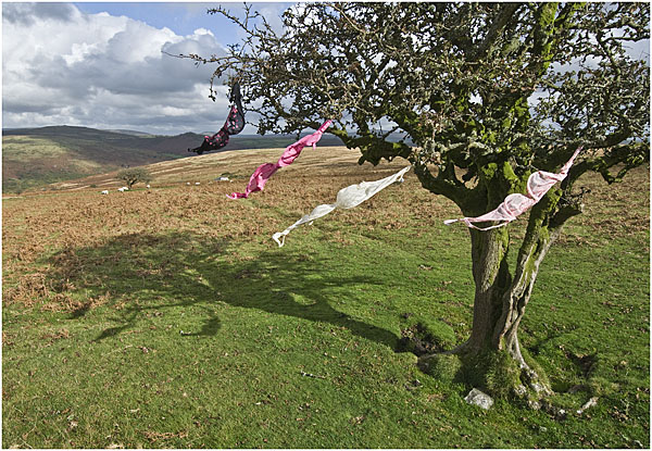Branches, bras and the Beaufort Scale