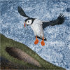 #18 Puffin - adapted to water (swimming), air (flight) and land.