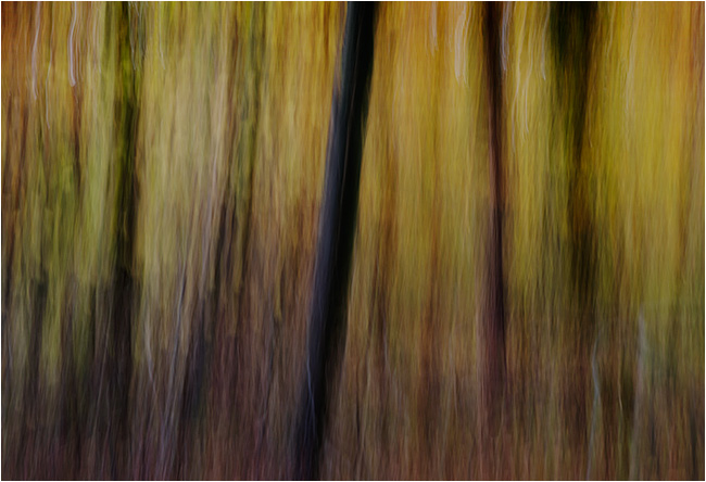 Autumn impressions - Beechwood 3