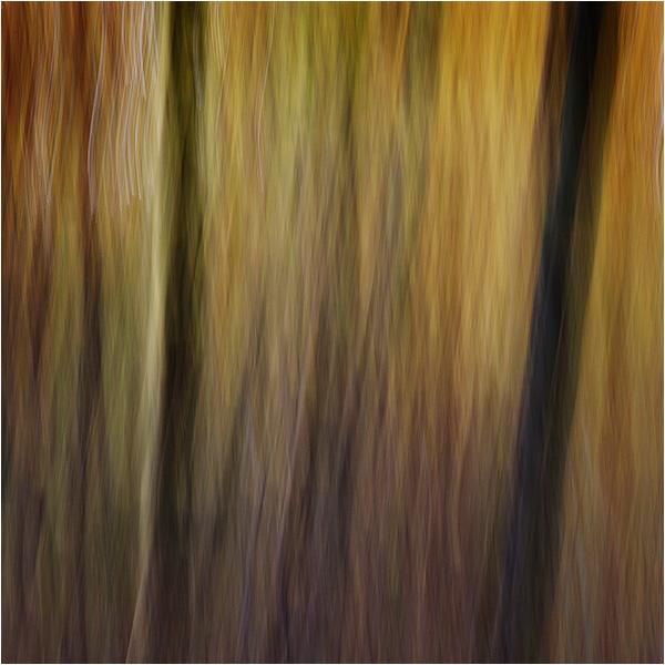 Autumn impressions - Flames of colour