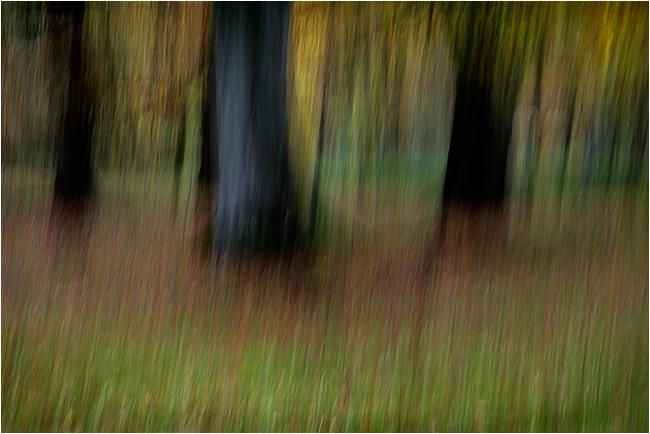 Autumn impressions - Beechwood 1