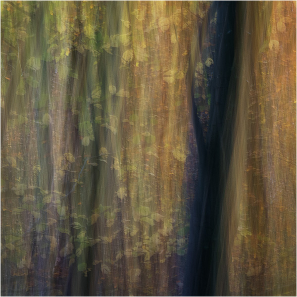 Beechwood - Detailed impressions