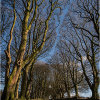 Beech Avenue - The road less travelled