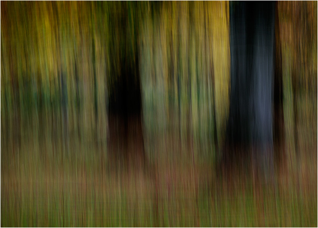 Autumn impressions - Beechwood 2