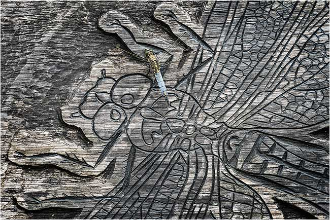 Black tailed skimmer on carving of dragonfly