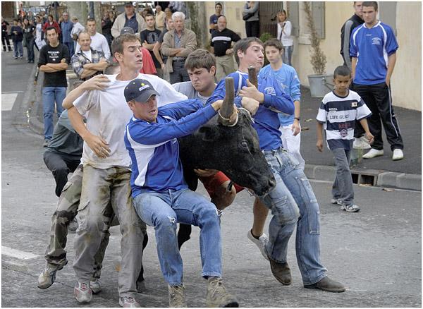 Bull running - St Remy