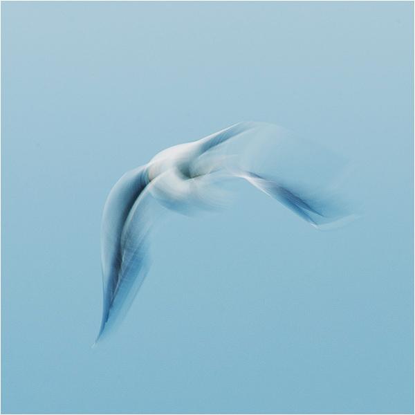 Gull impressions #6