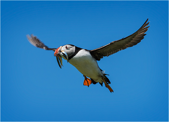 Landing the catch