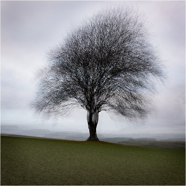 Lone tree in stormy weather