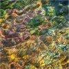 Nature's intertidal gems #9