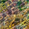 Nature's intertidal gems #10