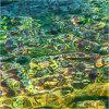 Nature's intertidal gems #11