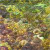 Nature's intertidal gems #12