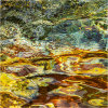 Nature's intertidal gems #13