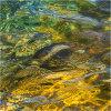 Nature's intertidal gems #2