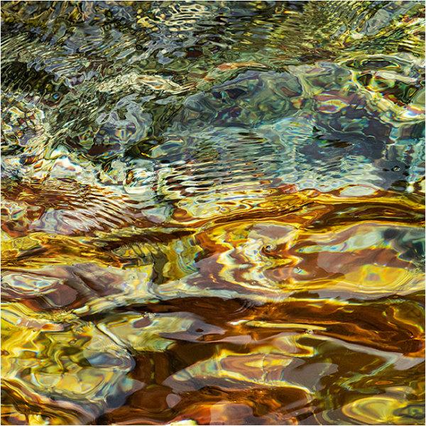 Nature's intertidal gems #4