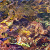 Nature's intertidal gems #5