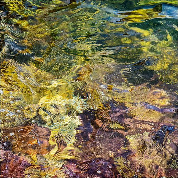 Nature's intertidal gems #6