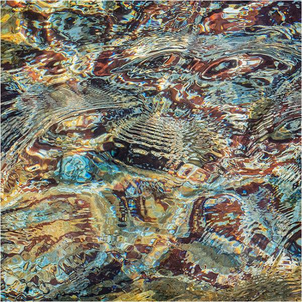 Nature's intertidal gems #8