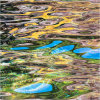 Nature's intertidal gems #16