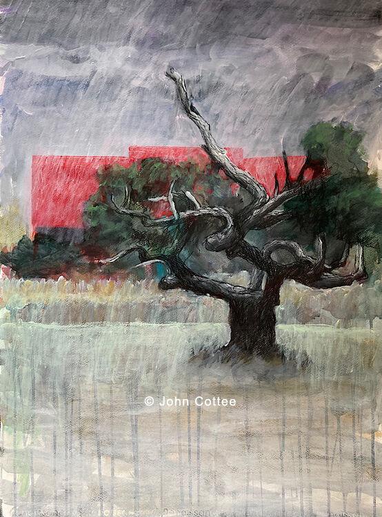 Tree, roof, rain