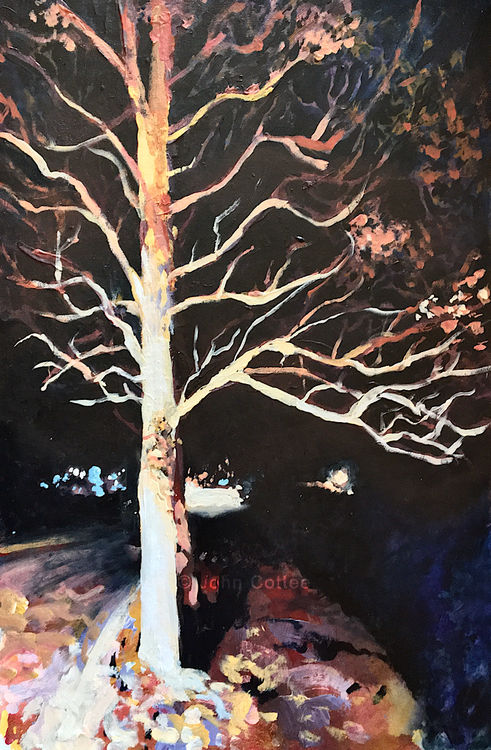 Tree under streetlight