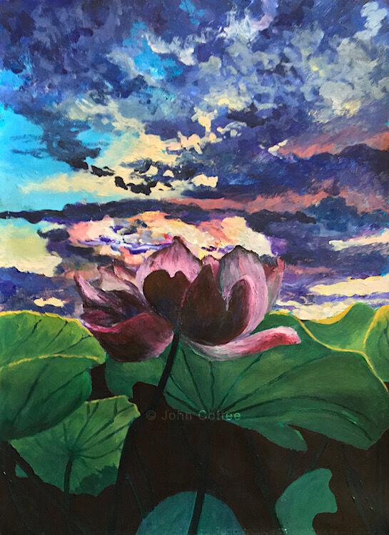 Lotus at sunset