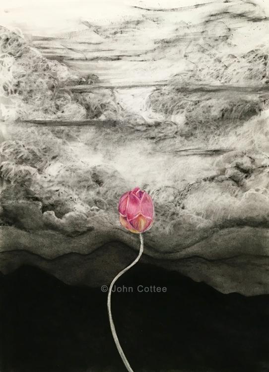 lotus fantasy