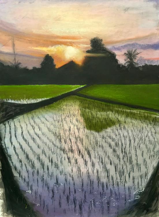 sun and rice