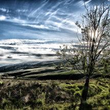 Beautiful Tree, Snowdonia