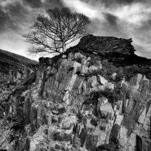 Tree at Dinorwic