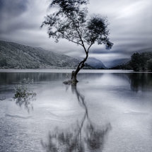 Lonely Tree at Llyn Padarn
