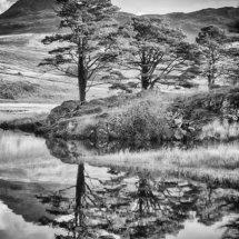 Snowdon Trees (B&W)