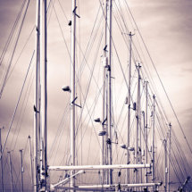 Symmetry in Yachts - a portrait of yacht masts