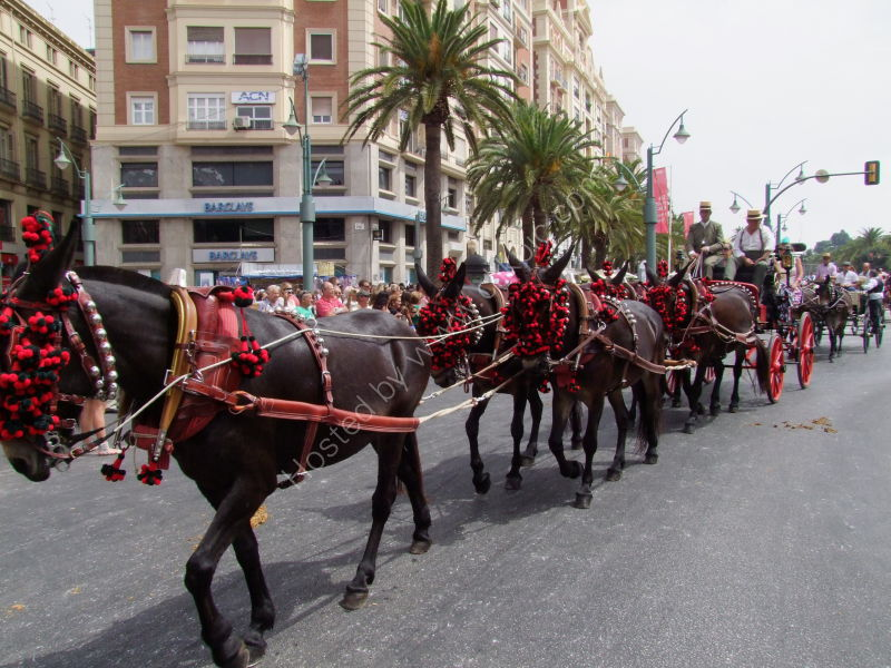 Horses & Carriage, Malaga Festival, Plaza de La Marina