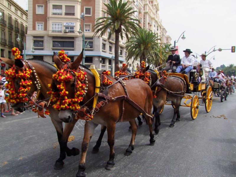 Horse Drawn Carriage, Malaga Festival