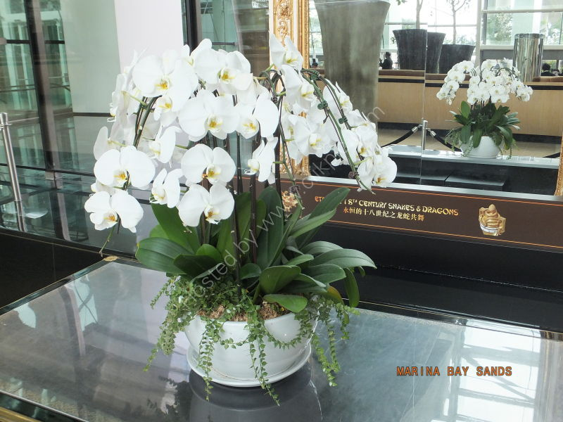 Orchids, Marina Bay Sands Hotel, Marina Bay