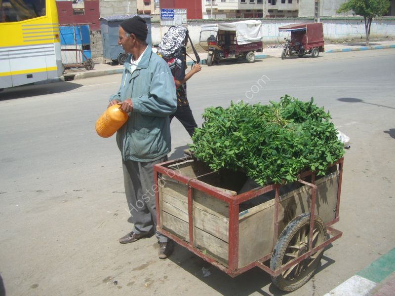 Fresh Herb Seller