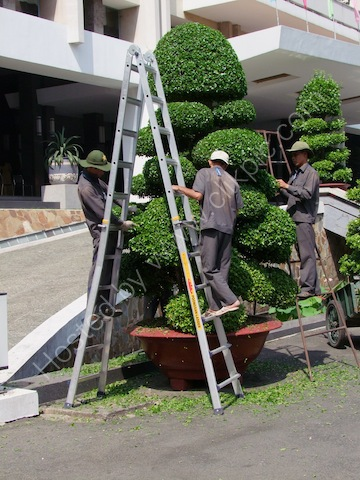 Trimming the Bonsia Tree, Hoi Troung Thong Nhat (Reunification Palace), Ho Chi Minh City