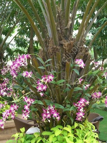 Orchids, Park Hyatt, Ho Chi Minh City